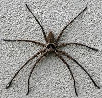 Suan Mokkh Spider