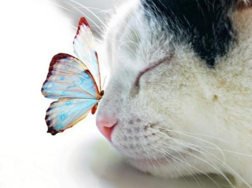 a.aaa-cat-with-butterfly