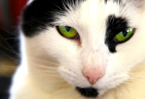 webmd_rm_photo_of_green_eyed_cat